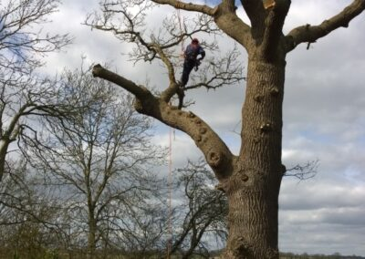 Tree surgery services from WG Landscapes